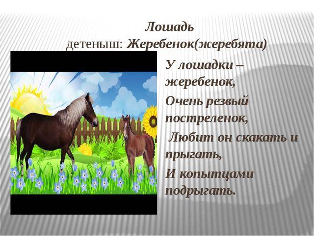 Лошадь детеныш: Жеребенок(жеребята) У лошадки – жеребенок, Очень резвый пост...