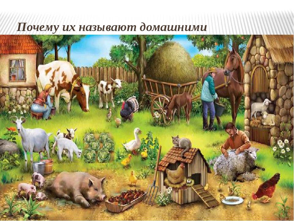 Почему их называют домашними животными?