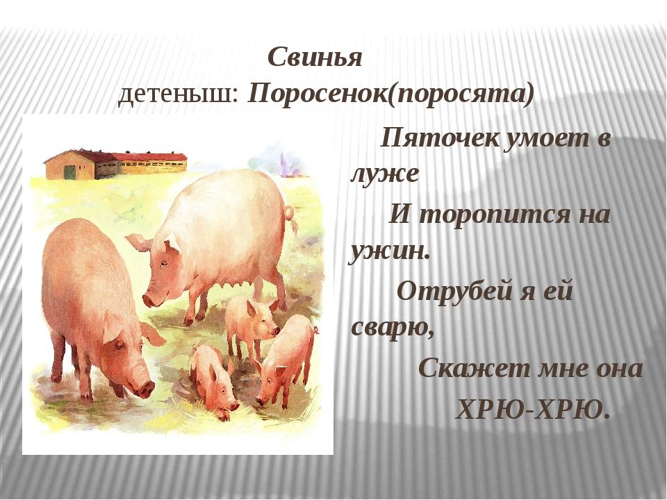 Свинья детеныш: Поросенок(поросята) Пяточек умоет в луже И торопится на ужин...