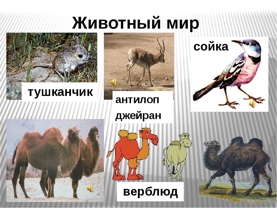 Редкие животные Под угрозой исчезновения оказались: Гигантский слепыш Перевяз...