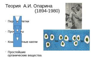Теория А.И. Опарина (1894-1980) Первые клетки Пробионты Коацерватные капли Пр
