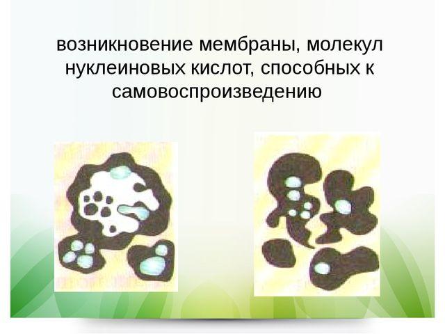 возникновение мембраны, молекул нуклеиновых кислот, способных к самовоспроизв...