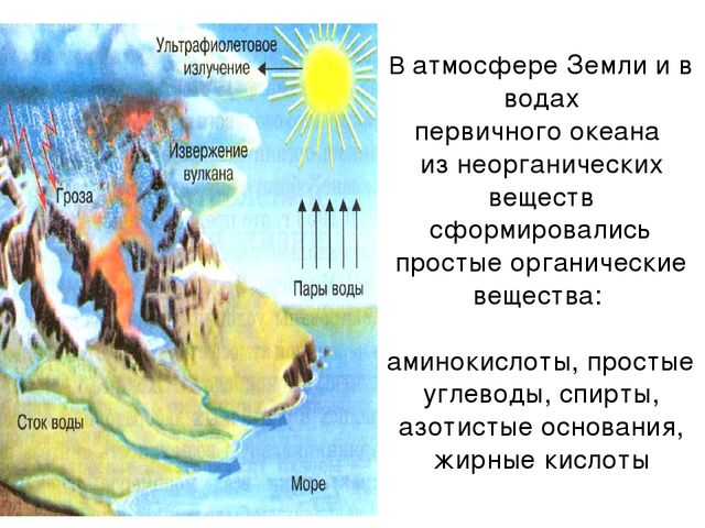 В атмосфере Земли и в водах первичного океана из неорганических веществ сформ...