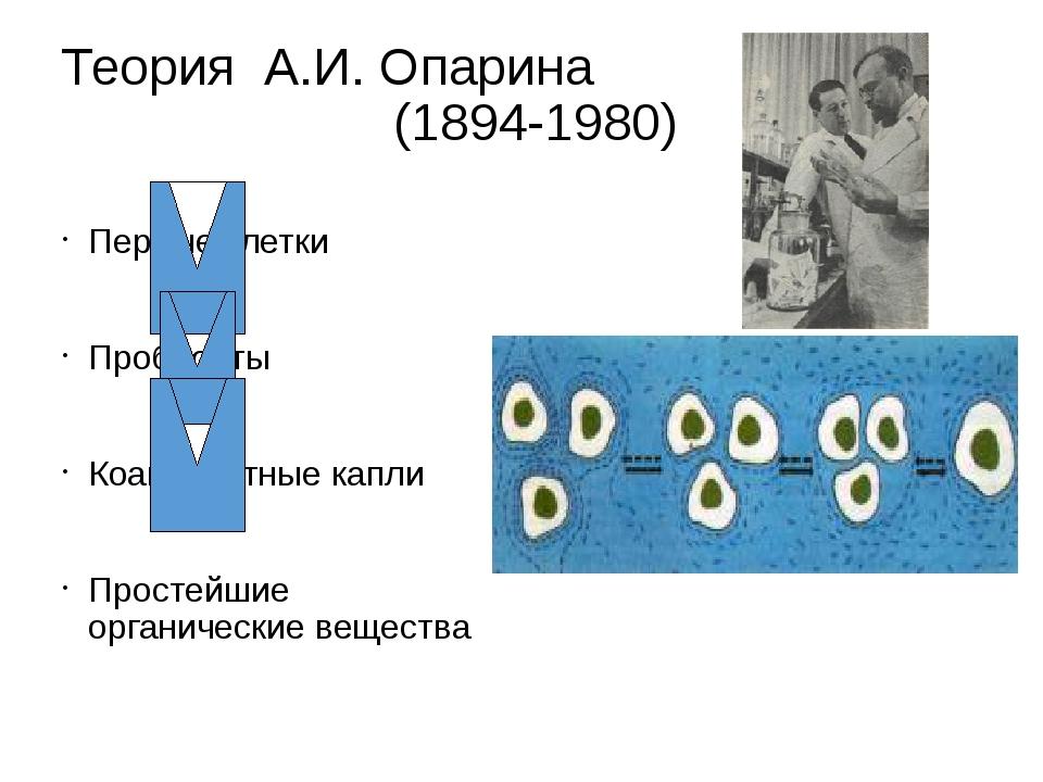 Теория А.И. Опарина (1894-1980) Первые клетки Пробионты Коацерватные капли Пр...