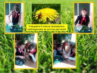 Учащиеся 6 класса занимались наблюдением за ростом растений.