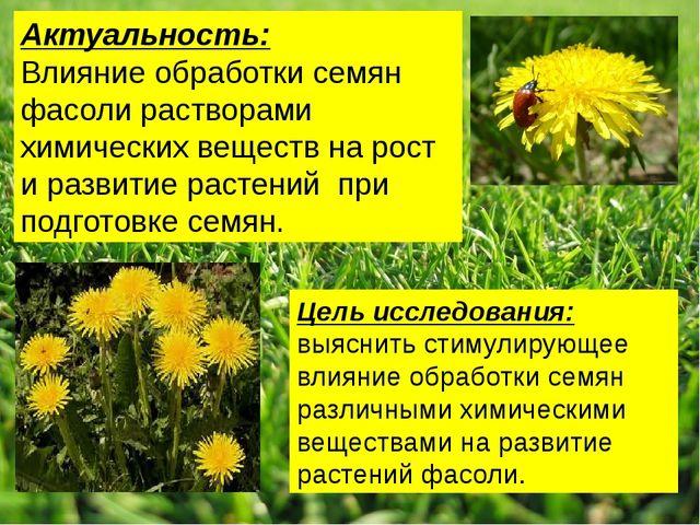 Актуальность: Влияние обработки семян фасоли растворами химических веществ н...