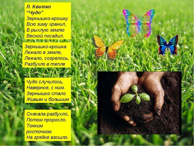"""Л. Квитко """"Чудо"""" Зернышко-крошку Всю зиму хранил, В рыхлую землю Весной посад..."""