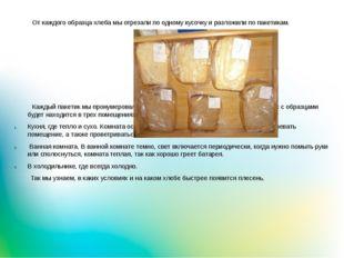 От каждого образца хлеба мы отрезали по одному кусочку и разложили по пакети