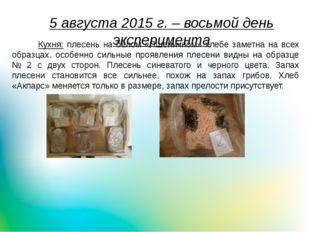 5 августа 2015 г. – восьмой день эксперимента Кухня: плесень на белом «Пшенич