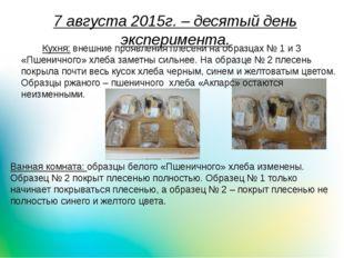 7 августа 2015г. – десятый день эксперимента. Кухня: внешние проявления плес