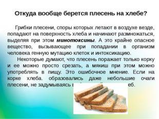 Откуда вообще берется плесень на хлебе? Грибки плесени, споры которых летают