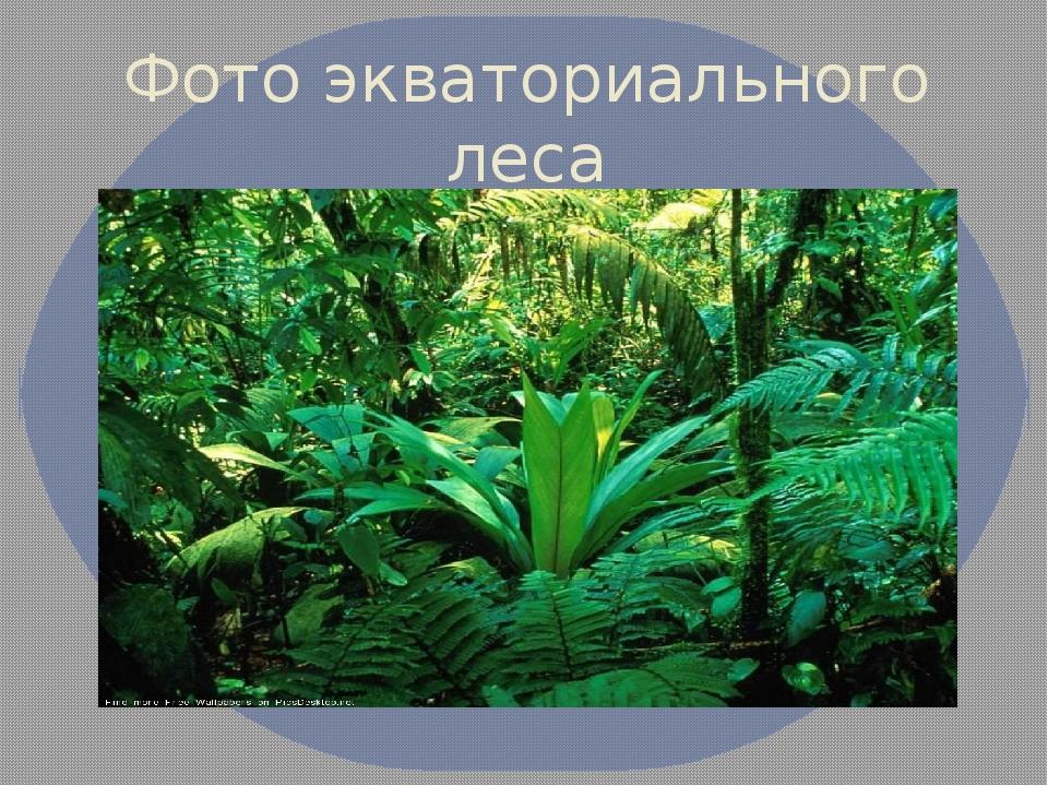 Фото экваториального леса
