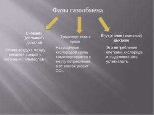 Фазы газообмена Внешнее (легочное) дыхание Транспорт газа к крови Внутреннее
