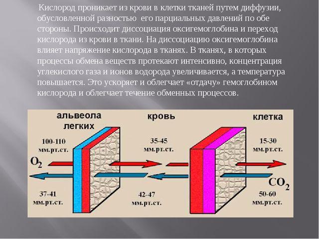 Кислород проникает из крови в клетки тканей путем диффузии, обусловленной ра...