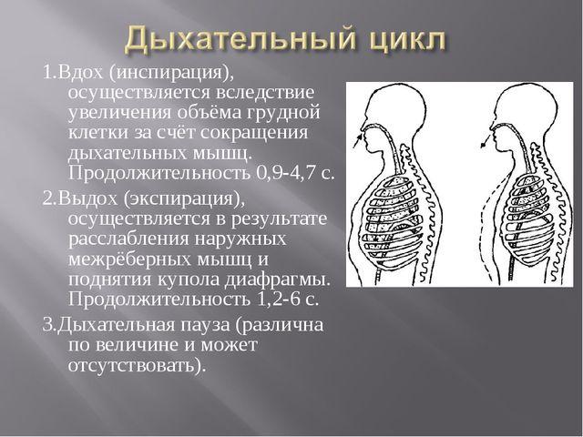 1.Вдох (инспирация), осуществляется вследствие увеличения объёма грудной клет...