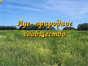 Луг- природное сообщество