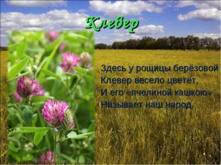 Клевер Здесь у рощицы берёзовой Клевер весело цветёт, И его «пчелиной кашкою»