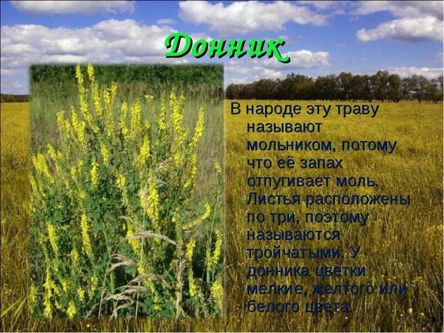 Донник В народе эту траву называют мольником, потому что её запах отпугивает...