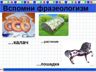 Вспомни фразеологизм …калач …лошадка …растение