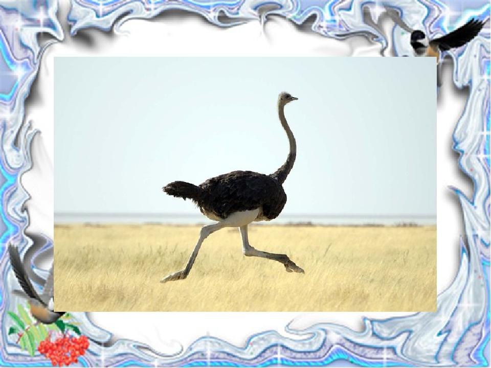 И петь не поёт, И летать не летает … За что же тогда Его птицей считают?