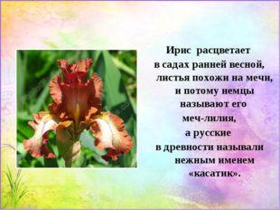 Ирис расцветает в садах ранней весной, листья похожи на мечи, и потому немцы