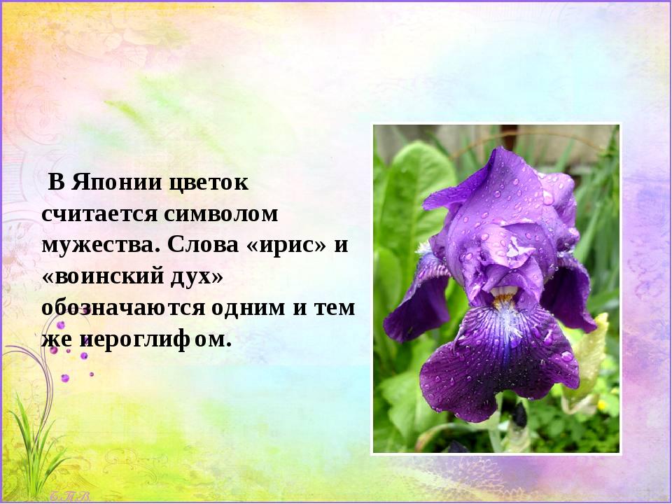 В Японии цветок считается символом мужества. Слова «ирис» и «воинский дух» о...