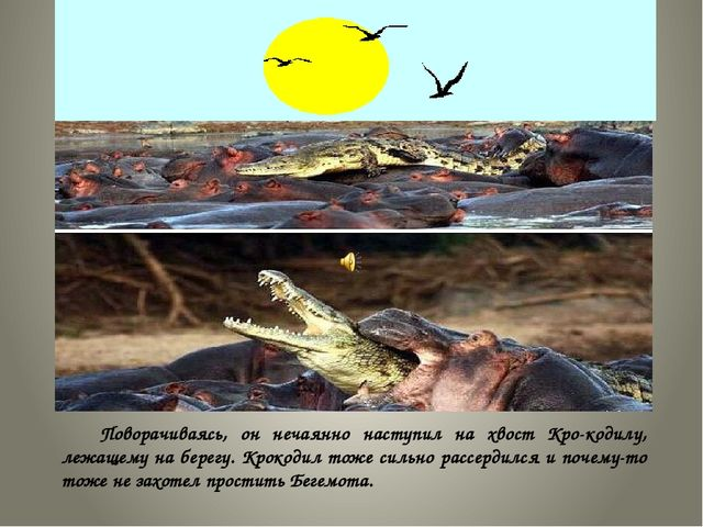 Поворачиваясь, он нечаянно наступил на хвост Крокодилу, лежащему на берегу....