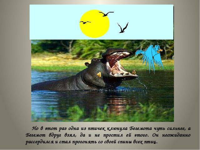 Но в этот раз одна из птичек клюнула Бегемота чуть сильнее, а Бегемот вдруг...