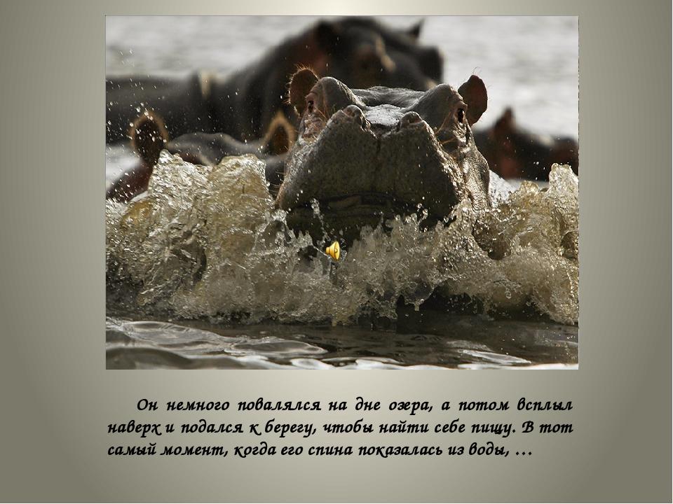 Он немного повалялся на дне озера, а потом всплыл наверх и подался к берегу,...