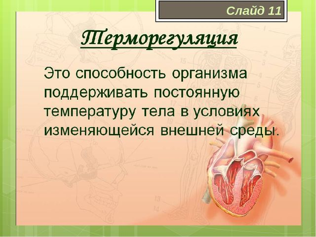 Терморегуляция Терморегуляция – совокупность физиологических и химических про...