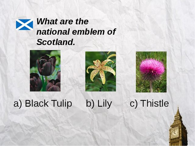 What are the national emblem of Scotland. a) Black Tulip c) Thistle b) Lily