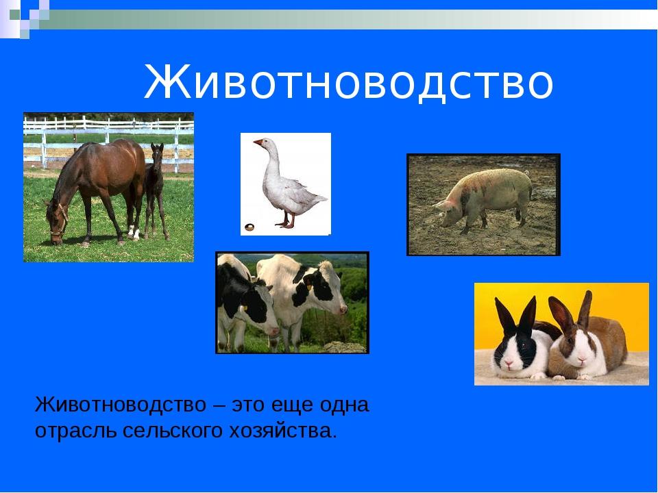 Животноводство Животноводство – это еще одна отрасль сельского хозяйства.
