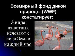 Всемирный фонд дикой природы (WWF) констатирует: 3 вида животных исчезают с л