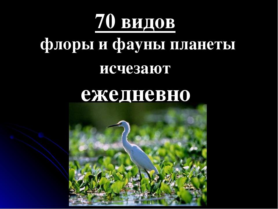 70 видов флоры и фауны планеты исчезают ежедневно
