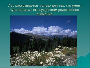 Лес раскрывается только для тех, кто умеет чувствовать к его существам родств