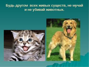 Будь другом всех живых существ, не мучай и не убивай животных.