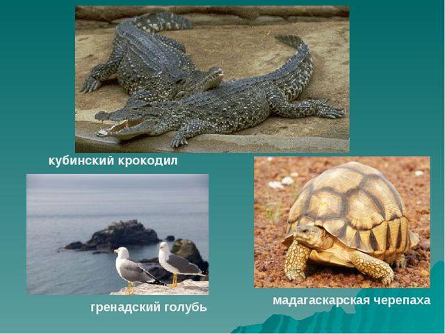кубинский крокодил гренадский голубь мадагаскарская черепаха