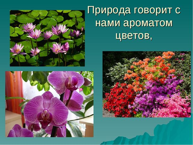 Природа говорит с нами ароматом цветов,