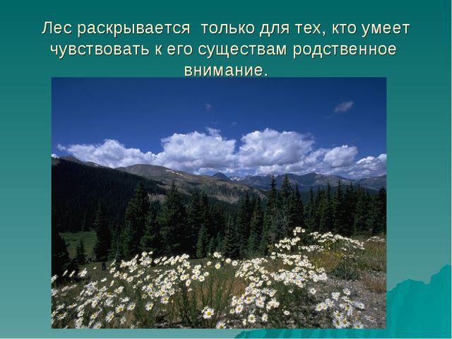 Лес раскрывается только для тех, кто умеет чувствовать к его существам родств...