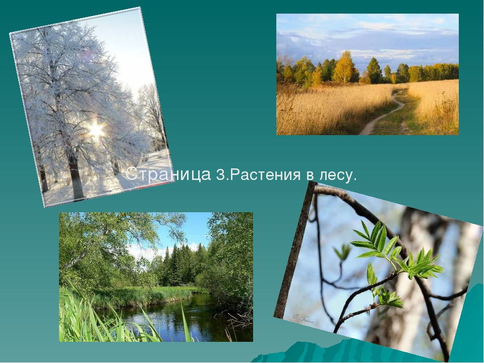 Страница 3.Растения в лесу.