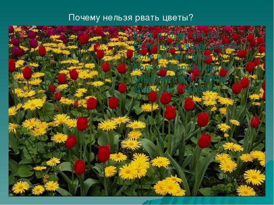 Если я сорву цветок Если ты сорвёшь цветок. Если все: и я и ты Если мы сорвём...