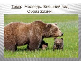 Тема: Медведь. Внешний вид. Образ жизни.