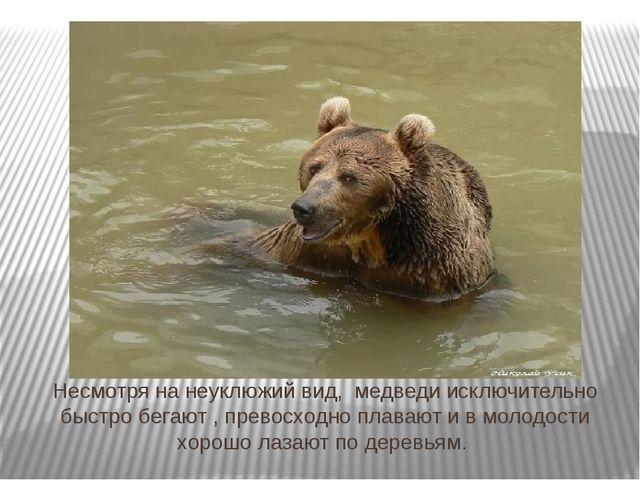 Несмотря на неуклюжий вид, медведи исключительно быстро бегают, превосходно...