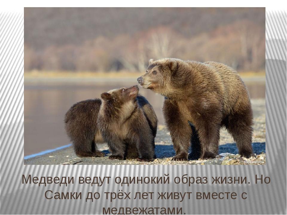 Медведи ведут одинокий образ жизни. Но Самки до трёх лет живут вместе с медве...