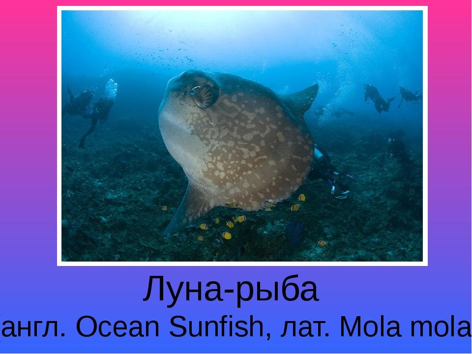 Луна-рыба (англ. Ocean Sunfish, лат. Mola mola)