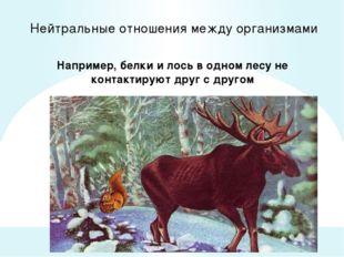 Нейтральные отношения между организмами Например, белки и лось в одном лесу н