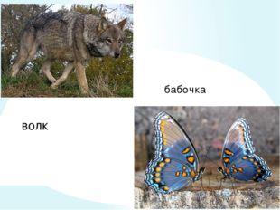 волк бабочка