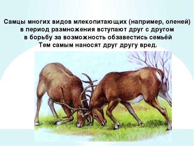 Самцы многих видов млекопитающих (например, оленей) в период размножения всту...