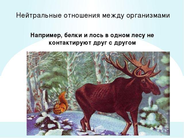 Нейтральные отношения между организмами Например, белки и лось в одном лесу н...