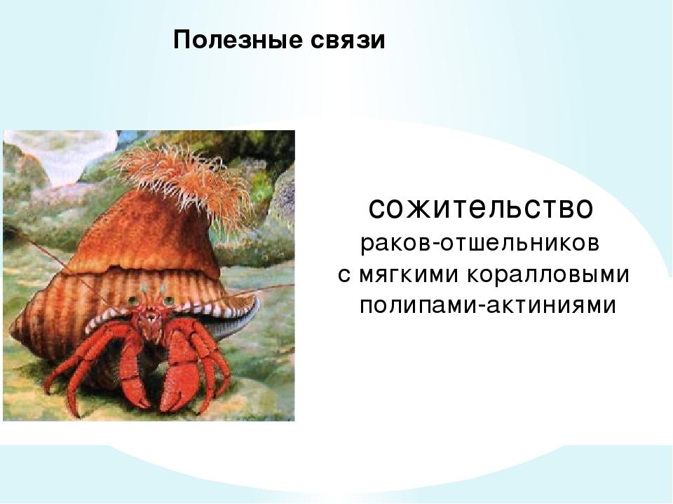 Полезные связи сожительство раков-отшельников с мягкими коралловыми полипами...